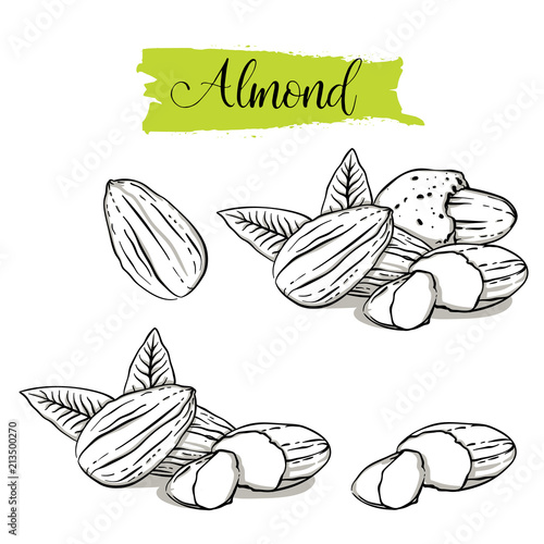 Hand drawn sketch style almond set Canvas Print