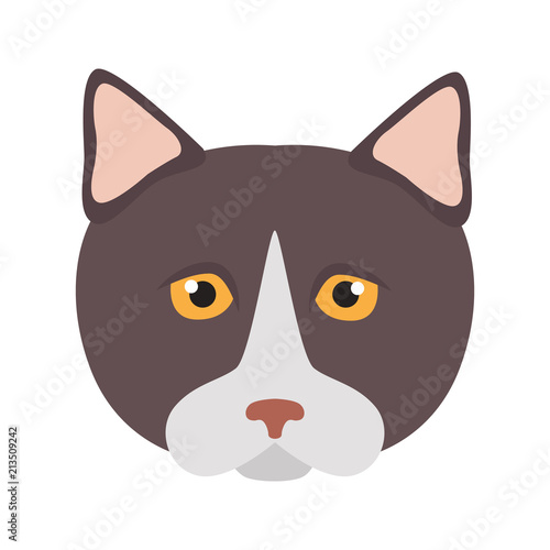 Fotografie, Obraz  Munchkin breed cat muzzle color vector icon