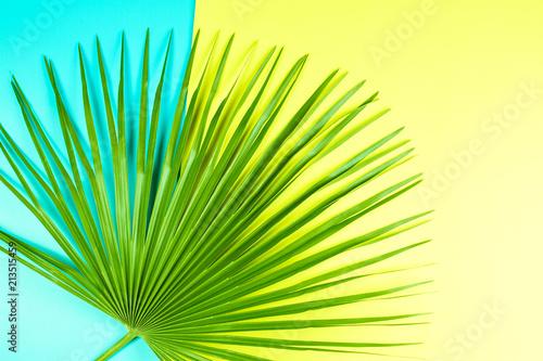 tropikalny-lisc-palmowy-z-kolorowym-tlem