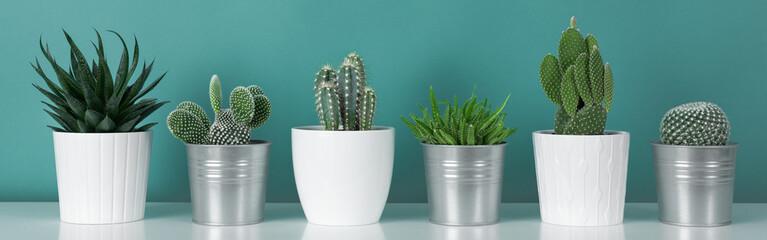 Moderna dekoracija sobe. Zbirka raznih biljaka kaktusnih biljaka u saksiji na bijeloj polici uz zid pastelne tirkizne boje. Kaktus biljaka natpis.