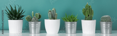 Fotobehang Planten Modern room decoration. Collection of various potted cactus house plants on white shelf against pastel turquoise colored wall. Cactus plants banner.