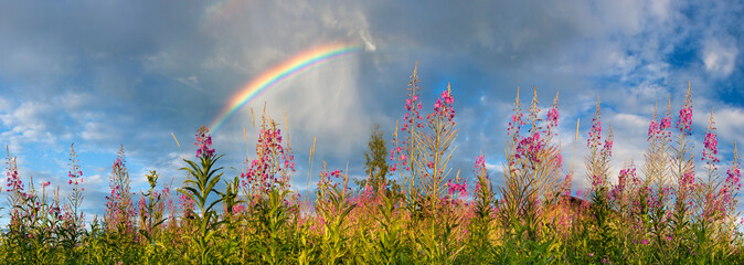 landscape panorama with flowering meadow and rainbow in sky