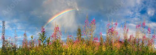 Fotografie, Obraz landscape panorama with flowering meadow and rainbow in sky