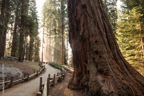 Foto op Canvas Verenigde Staten Sunset in Sequoia national park in California, USA