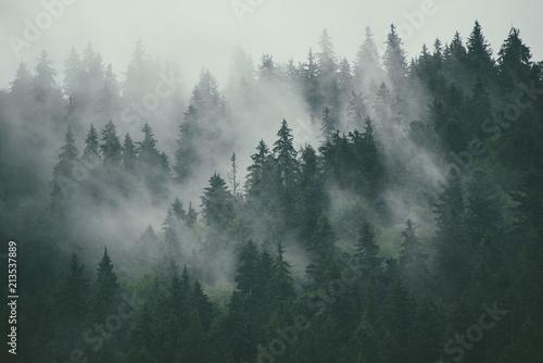 Poster Bleu nuit Misty landscape with fir forest in hipster vintage retro style