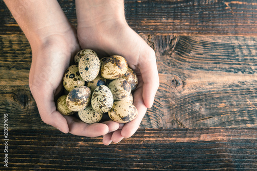 quail eggs and hands