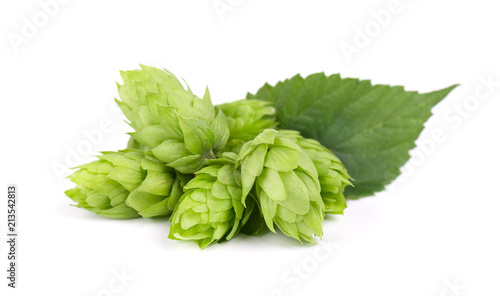 Fotomural Fresh green hop branch, isolated on a white background