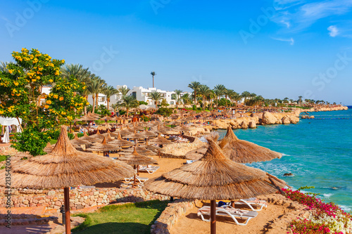 Tuinposter Egypte Sunny resort beach with palm tree at the coast shore of Red Sea in Sharm el Sheikh, Sinai, Egypt, Asia in summer hot. Bright sunny light