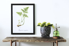 Stylish White Room With Wooden Console, Mock Up Poster Frame, Beautiful Plants And Sprinkler. Modern Composition Of Home Garden  Interior.