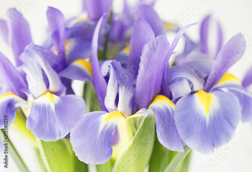 Poster Iris Photograph of a bouquet of purple Iris on white