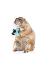 Little Prairie Dog Holding Blu...