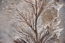 Sea Plant Fossil In Stone