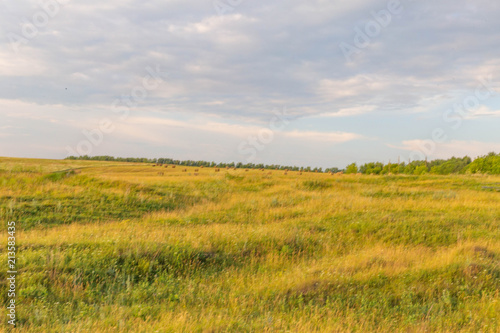 Foto op Canvas Honing field of the Chuvash Republic