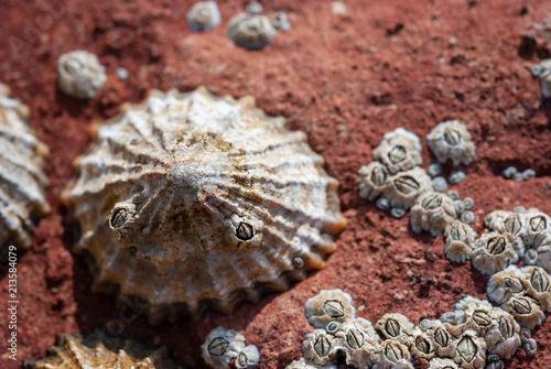 Shellfish and barnacles on a rock Wallpaper Mural