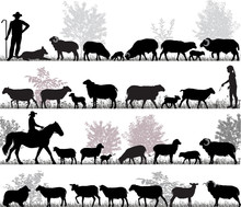 Silhouettes Of Sheeps, Rams An...