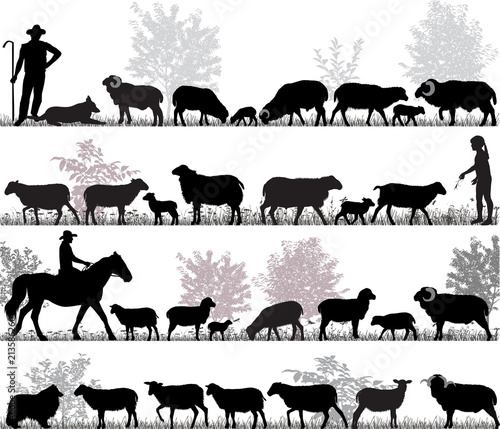 Fotografia Silhouettes of sheeps, rams and lambs outdoors