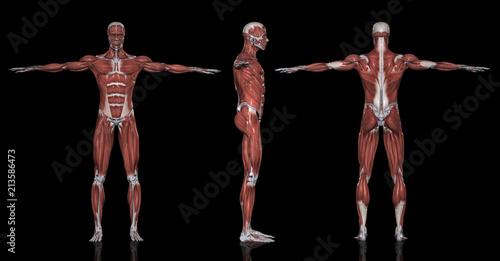 筋肉図方位別一覧 Adobe Stock でこのストックイラストを購入して