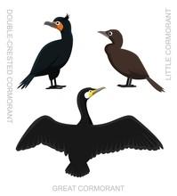 Bird Cormorant Set Cartoon Vec...