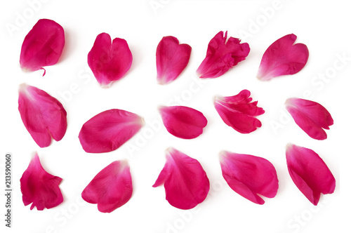 peony petals isolated on white background