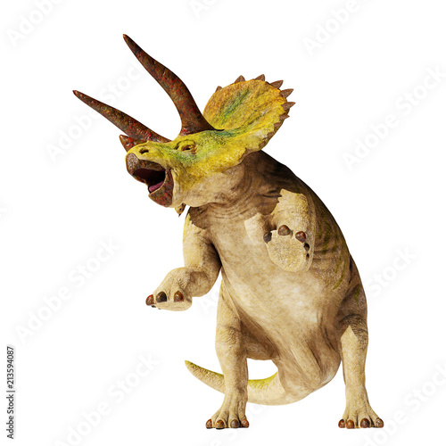 Fotografie, Obraz  Triceratops horridus dinosaur in action (3d illustration isolated on white backg