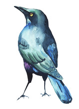 Watercolor Bird Illustration C...