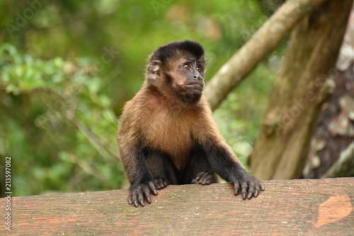 Tuinposter Eekhoorn Affe in Südafrika