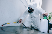 Pest Control Worker Spraying P...