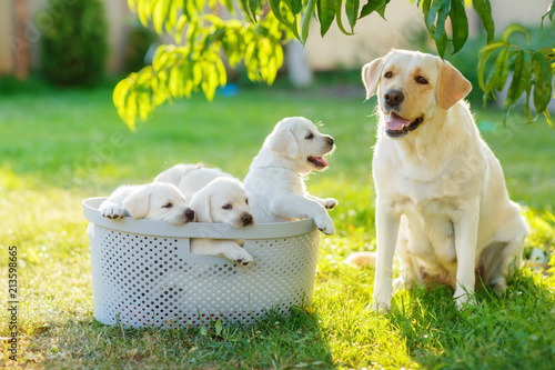 family dog mom and her children puppies are sitting in the basket Wallpaper Mural