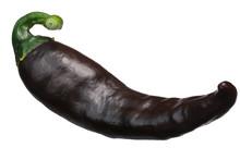Brown Chilaca Pasilla Chile Pepper, Paths