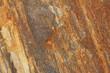 canvas print picture - Sandstein rostfarben
