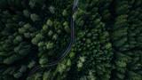 Fototapeta Uliczki - Woodland and street from above
