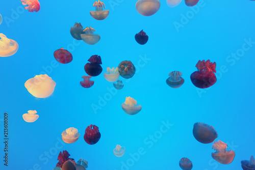 Valokuva  jellyfish in the aquarium