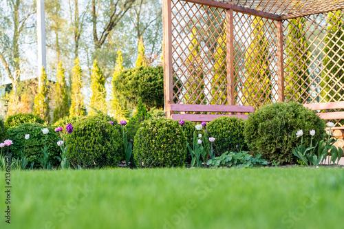 Fotografia Beautiful green garden with frsesh boxwood bushes, flowers and wood grating summerhouse