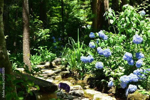Fotografering  紫陽花とせせらぎ