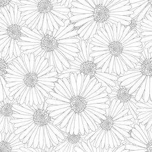 Aster, Daisy Flower Outline Seamless Background
