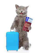 Happy Cat Holds Suitcase, Airl...