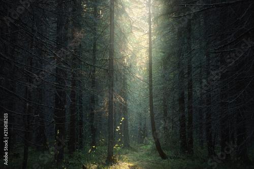 Foto op Canvas Weg in bos sunlight into the dark forest