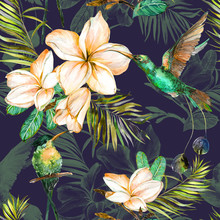Beautiful Colorful Colibri And Plumeria Flowers On Dark Background. Exotic Tropical Seamless Pattern. Watecolor Painting. Hand Painted Illustration.