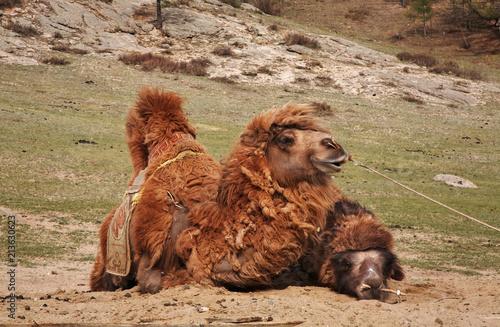 Gorkhi-Terelj National Park. Mongolia