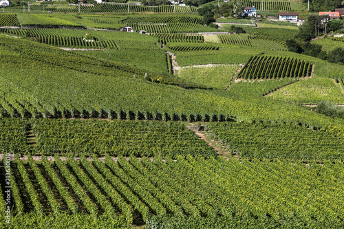 Papiers peints Vignoble Close up view of the famous Lavaux vineyard between Lausanne and Montreux in Canton Vaud in Switzerland.