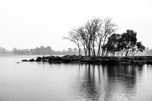 Black And White Landscape Of Bare Trees Growing On Small Island In A Lake On Rainy Misty Day