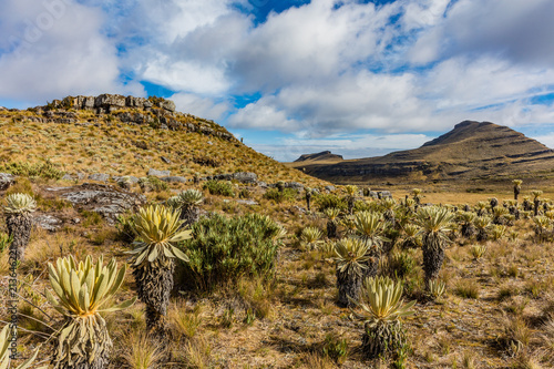 Foto op Plexiglas Zuid-Amerika land Paramo de Oceta and his Espeletia Frailejones Mongui Boyaca in Colombia South America