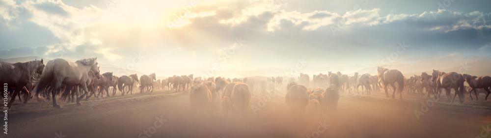 Fototapety, obrazy: Wild horse