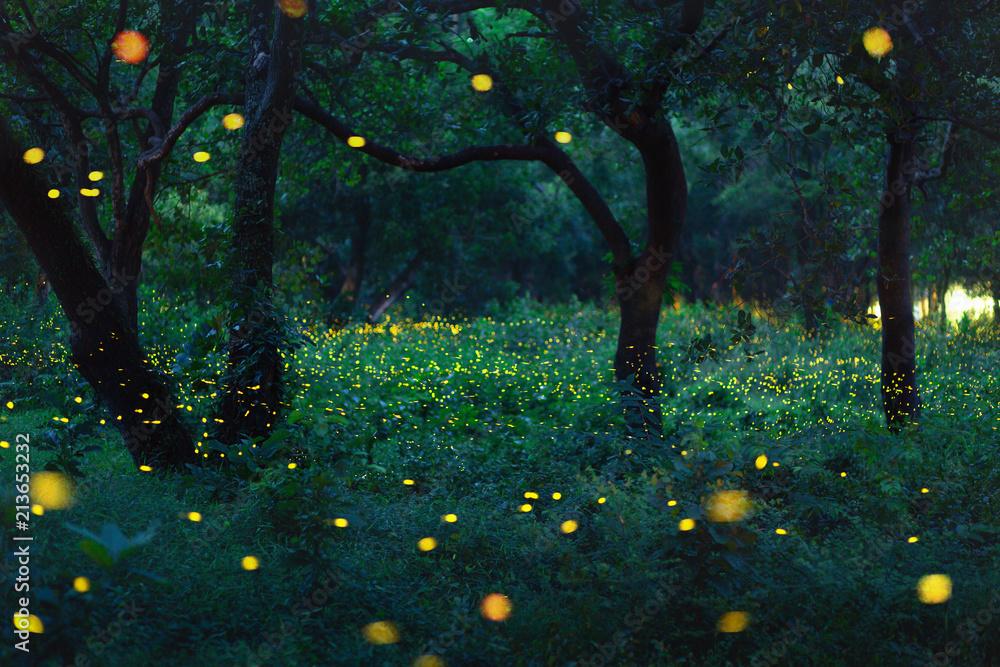 Fototapeta Bokeh light of firefly in forest