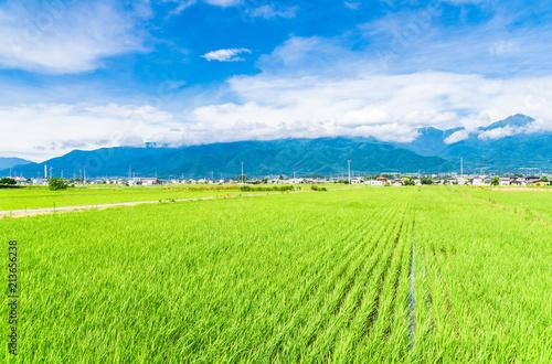 In de dag Lime groen 夏の信州 安曇野の田園風景