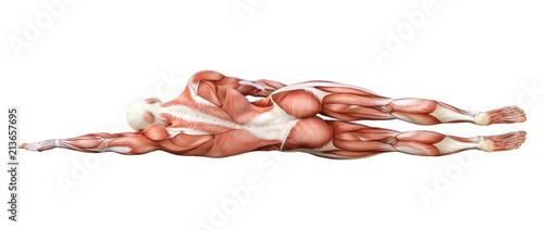 Obraz na plátně 3D Rendering Female Anatomy Figure on White