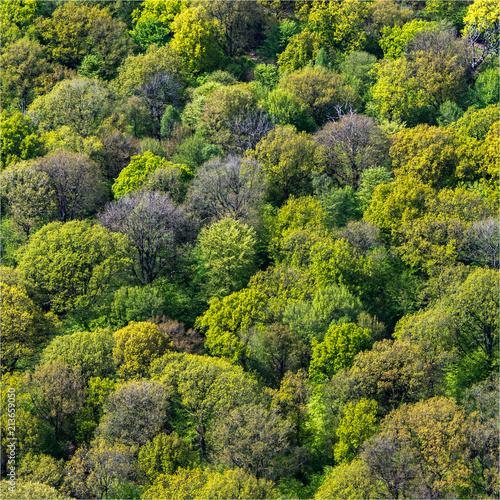 vue aérienne de la forêt de Rambouillet dans les Yvelines en france