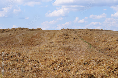 Tuinposter Blauwe hemel harvested field in hilly landscape