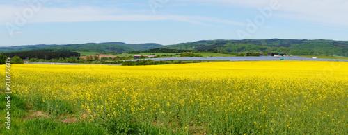 Poster Jaune Blühendes Rapsfeld im Alftal mit einer großen Solaranlage im Hintergrund Panorama