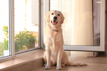 Cute dog near open window at home